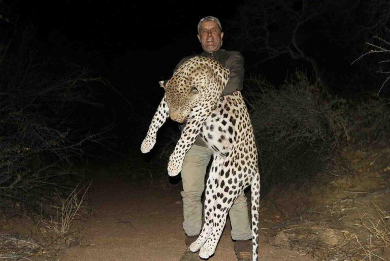 Leopardo medžioklė Namibijoje
